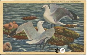 Sea Gulls, The Sacred Birds of Utah Vintage Linen Postcard Vintage Postcard