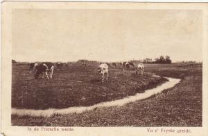 Cows in a pasture, In de Frieshe weide, Yn e' Fryske greide, Netherlands, 10-20s