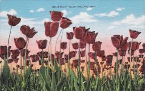 Michigan Holland Nelis Tulip Fields