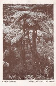 Fern Trees Man As Dwarf New Zealand Antique Postcard