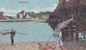 Shrimp Shrimpers Fishing Antique 1907 Postcard