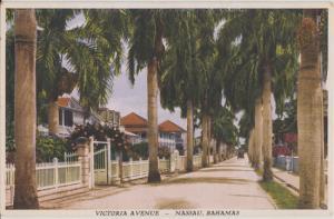 Nassau Bahamas - VICTORIA AVENUE lined with tall royal palm trees, 1930s era