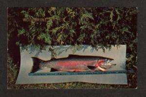 MI View Rainbow Trout WOLVERINE MICHIGAN Postcard Fish
