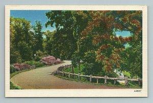 Sidewalk through Park, Nature, Street Light, Road, Flowers, Fence Postcard