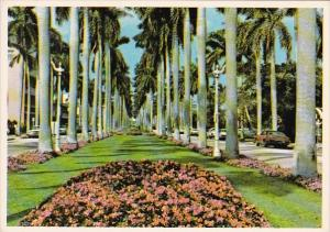 Florida Palm Beach Stately Royal Palms Line A Broad Avenue In Palm Beach