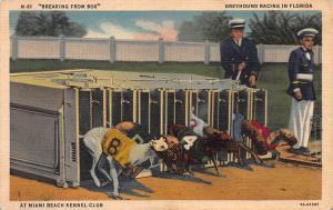 Grayhound Racing at Miami Beach, Kennel Club, Florida, early postcard, unused