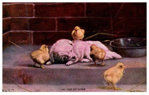 Dog ,Puppie and Chicks, No One at Home