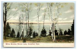 Postcard White Birches, Brome Lake, Knowlton, Quebec, Canada C14