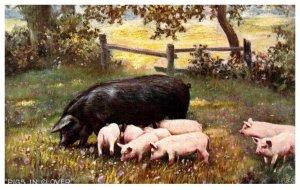 Pig, piglets , in Clover
