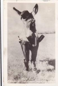 RP:Donkey wearing clothes , JACK ASS , Friend of the Great American Desert ...
