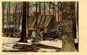 VT - Maple Sugaring. Scene in the Orchard