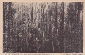 South Carolina Charleston Cypress Gardens Of Dean Hall Plantation