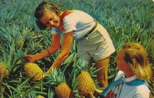 Hawaii Honolulu Luscious Pineapples
