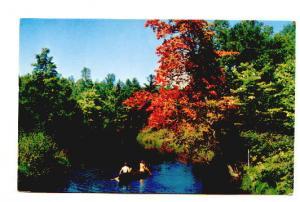Canoeing,  Greetings from Morehead City, North Carolina