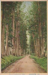 A Row Of Cryptomerias Nikko Antique Japanese Postcard