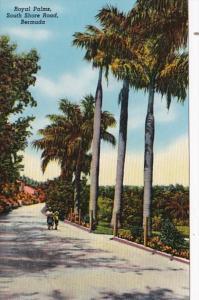 Bermuda Royal Palms South Shore Road