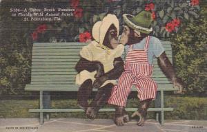 Monkeys A Green Bench Romance At Florida Wild Animal Rach Saint Petersburg Fl...