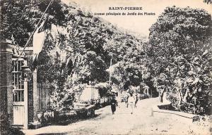 Carribean Island Martinique Saint-Pierre Avenue principale du Jardin des Plantes