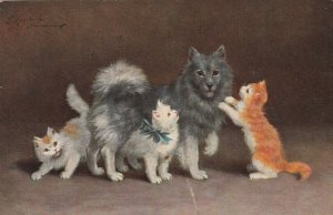 3 cats and a dog , 1907