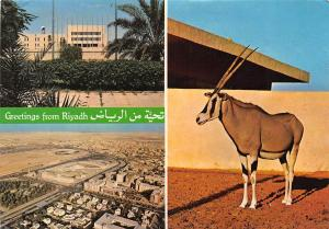 Saudi Arabia Greetings from Riyadh Mecca Library Panorama Animal