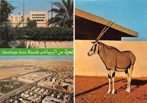 Saudi Arabia Greetings from Riyadh Mecca Library Panorama Animal