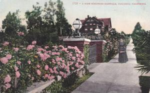 A Rose Bordered Sidewalk, Pasadena, California, 1900-1910s