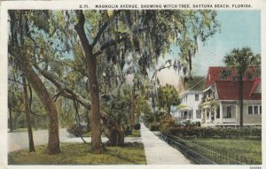 DAYTONA BEACH, Florida , 1910s ;  Magnolia Avenue, Showing Witch Tree