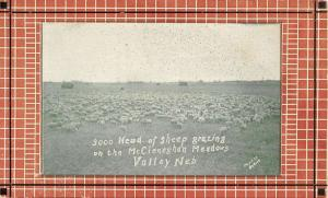 McCleneghan Meadows Valley Nebraska Sheep Pasture Antique Postcard K76604