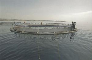 Cyprus developing fish farming by Kimagro postcard