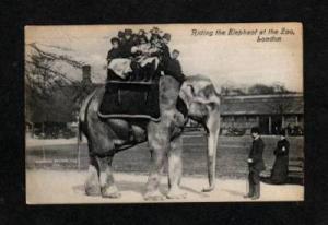 UK Elephant Ride Riding at Zoo LONDON ENGLAND POSTCARD