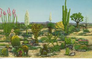 Desert Vegetation ~ White's City NM ~ Carlsbad Caverns National Park Postcard