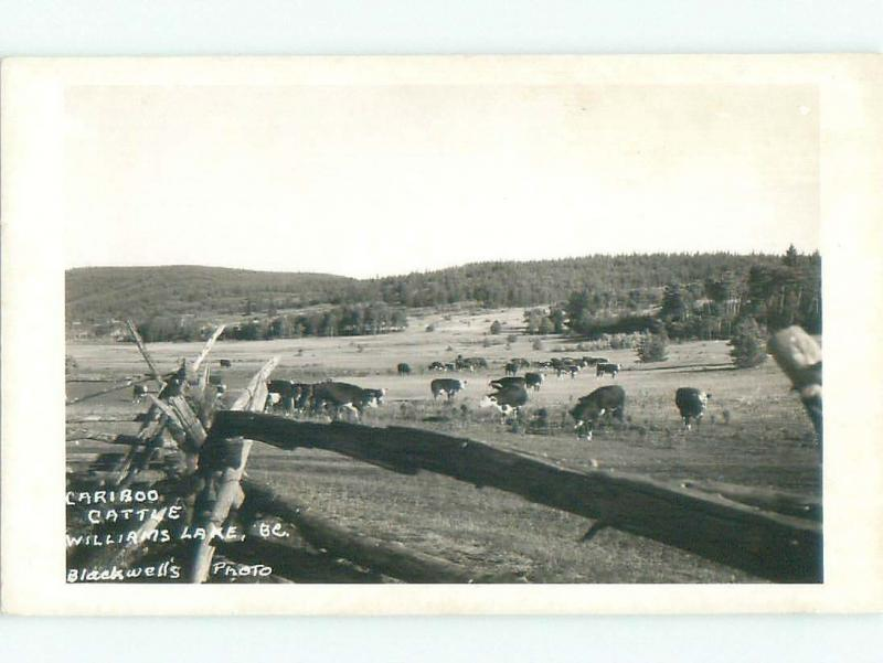 Pre-1962 rppc WILLIAMS LAKE Between Kamloops & Prince George BC W1005