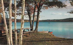 USA, The Perfect Campsite, unused Postcard