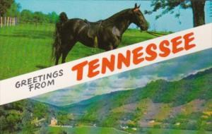 Greetings From Tennessee With Tennessee Walking Horse