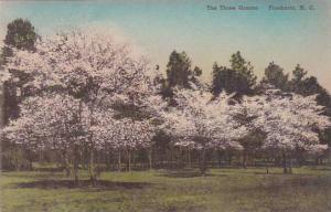 North Carolina Pinehurst The Three Graces Albertype