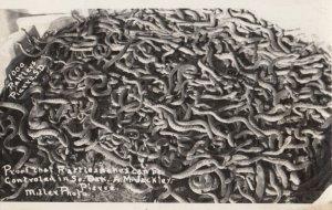 RP: PIERRE , South Dakota , 1959 ; Rattlesnake Control