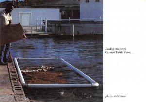 Grand Cayman Islands Post card Old Vintage Antique Postcard Feeding Breeders....