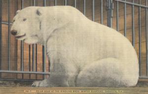 SARASOTA , Florida, 30-40s , Polar Bear , Ringking Bros Circus Winter Quarters