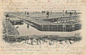 ARCACHON FRANCE~UN PARC AUX HUÎTRES-OYSTER PARK~1902 PHOTO POSTCARD