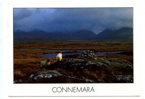 UK - Ireland, Connemara, County Galway. The Twelve Bens
