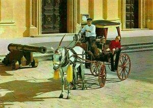 Malta Maltese Karozzin Cannon Horse Carriage Postcard