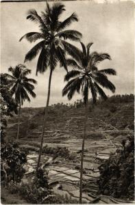 CPA Indonesia Sawah-landschap - Bali (360242)