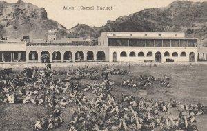 ADEN , Yemen , Camel Market , 00-10s