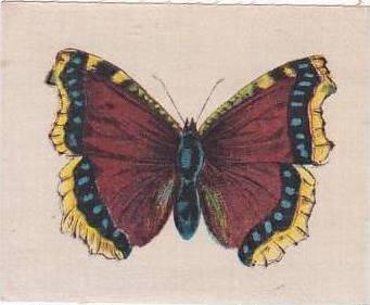 R J Lea Golden Knight Vintage Silk Cigarette Card Butterflies Catocala Electa