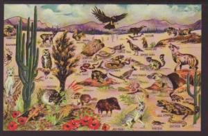 Wildlife of the Desert Postcard