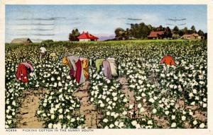 Picking Cotton in the Sunny South