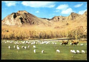 BOGDYN GOL river Landscape MONGOLIA Real Photo MNR Postcard