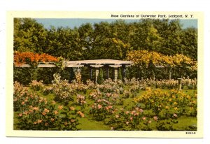 NY - Lockport. Outwater Park Rose Gardens