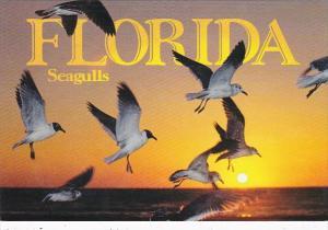 Florida Birds Seagulls