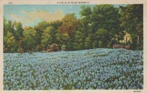 A Field Of Blue Bonnets Vintage Postcard 1936